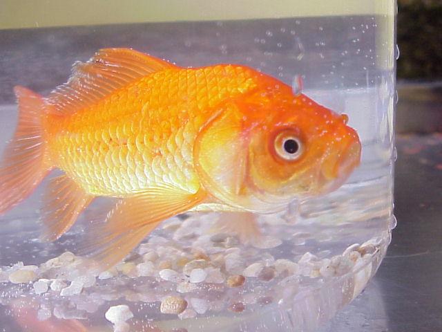 goldfish respiration lab answers